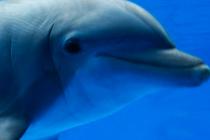 Cabo San Lucas Dolphin Swims