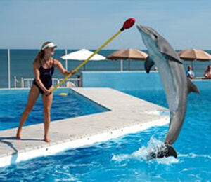 Cabo San Lucas Dolphin Trainer