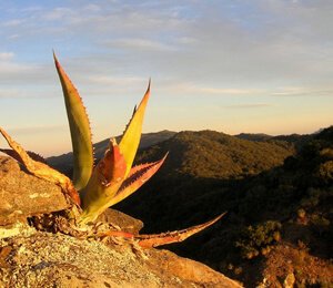 Cabo San Lucas Hiking Tours