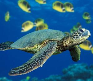 Cabo San Lucas Turtle Release